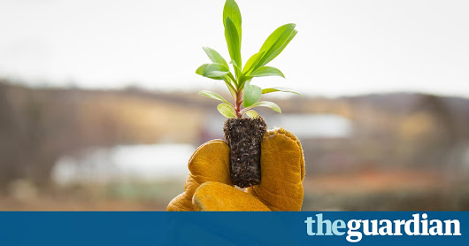 Can we feed 10 billion people on organic farming alone? | Guardian Sustainable Business | The Guardian