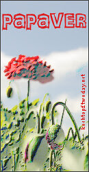 Blog-Event LXXX - Papaver (Einsendeschluss 15. August 2012)