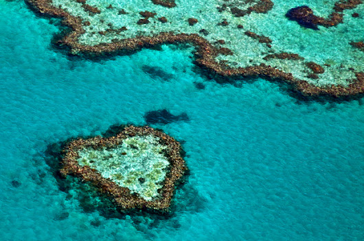 Great Barrier bleach: Mass bleaching is hitting world's largest coral reef system