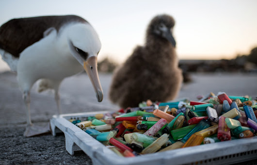 Plastic island: How our trash is destroying paradise