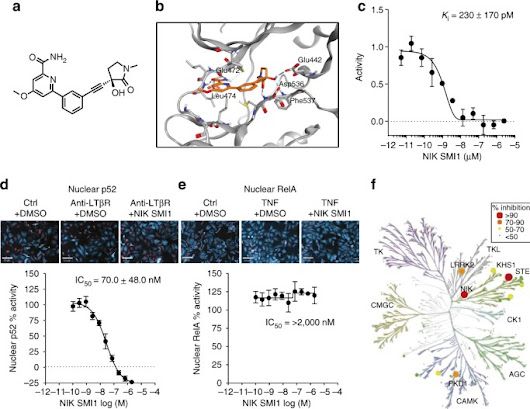 NF-κB inducing kinase is a therapeutic target for systemic lupus erythematosus | Nature Communications