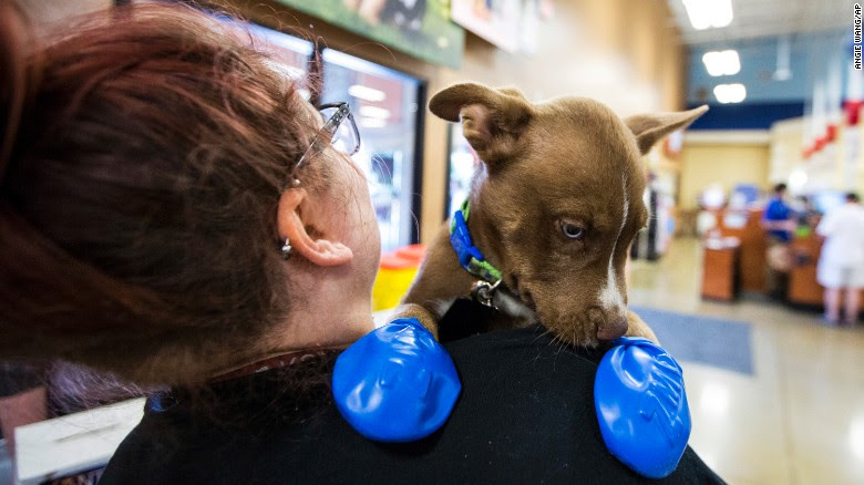 """Morgan Reed, a promotions assistant for the Phoenix radio station KSLX, plays with a puppy wearing elastic booties at a PetSmart in Tempe, Arizona, on Tuesday, June 20. The radio station handed out the booties to protect dogs' paws from the hot pavement. <a href=""""http://www.cnn.com/2017/06/20/us/weather-west-heat-wave/index.html"""" target=""""_blank"""">A punishing heat wave</a> is breaking records in parts of the western United States, causing massive power outages and prompting flight cancellations."""
