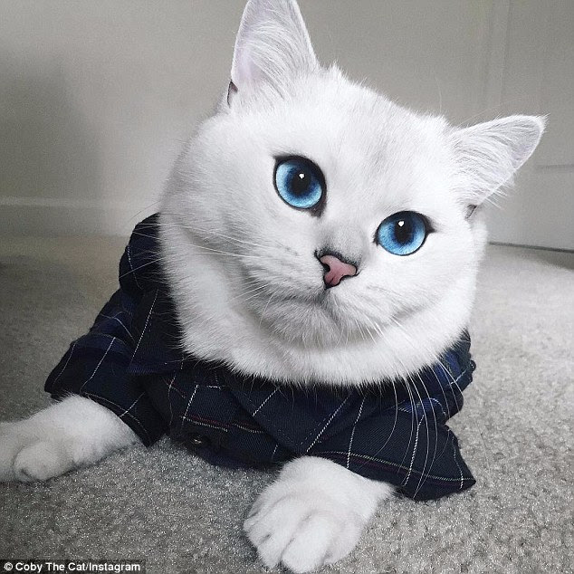 Eye see you: Coby has rocketed to fame on Instagram and has more than 275,000 followers