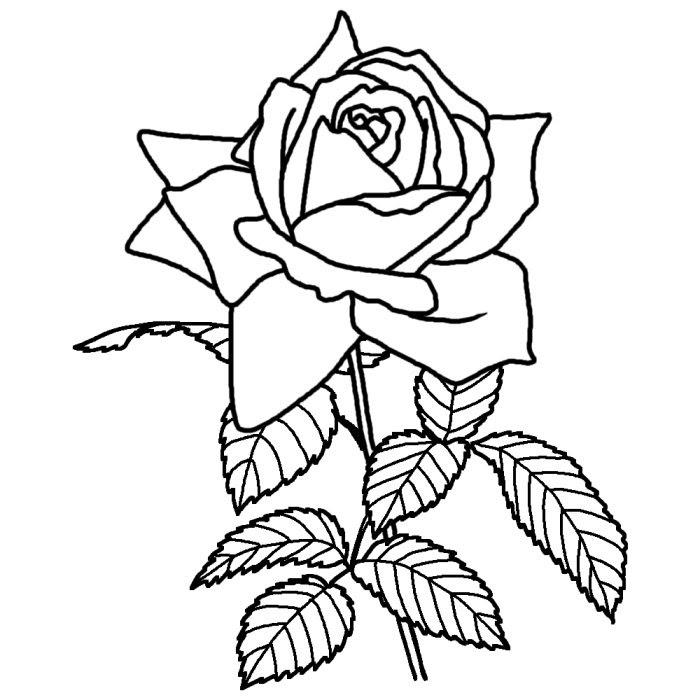 バラ薔薇白黒茨城県の花都道府県の木花鳥イラスト素材
