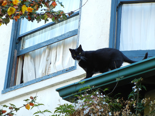 Cat on Rooftop _ 8675