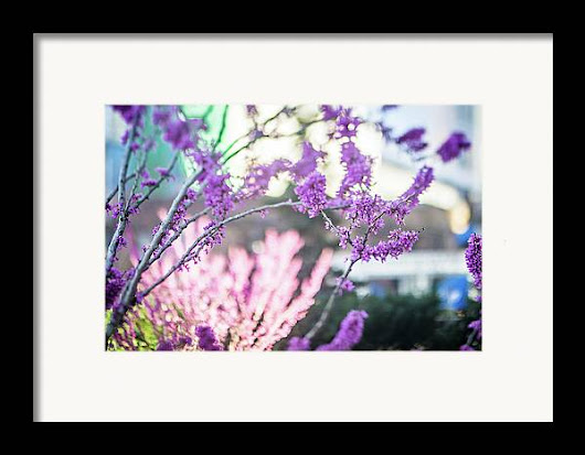 Early Spring Bloom In The City Framed Print
