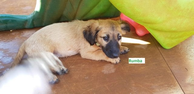 Clyde Lucky Lola Rex and Rumba – 3 month old male and female Cross-Breeds