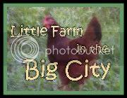 Little Farm in the Big City