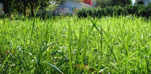 Spring Lawn Care Guide | Today's Homeowner
