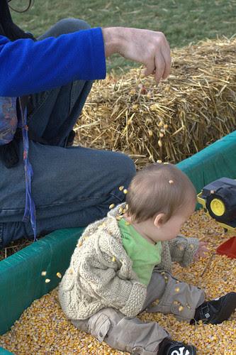 Sprinkling of corn