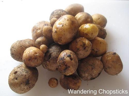 Homegrown Fingerling Potatoes 7