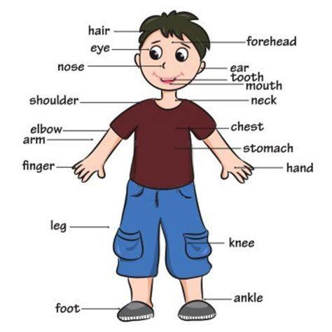 expressoes idiomaticas em ingles  partes  corpo