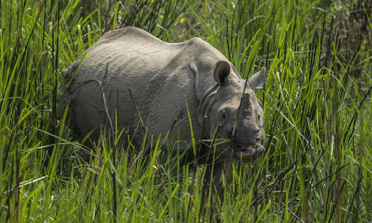 Celebrating an amazing two years of zero rhino poaching in Nepal