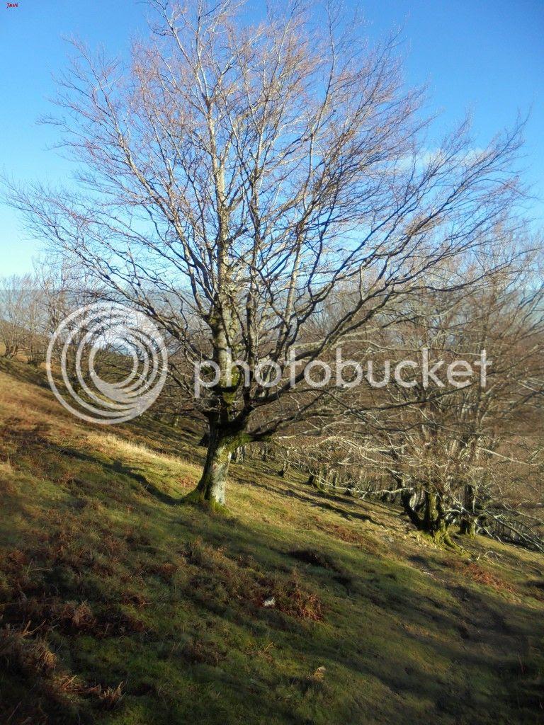 photo MENDAUR - MENDIEDER 09-01-16 031_zpss9aomjt0.jpg