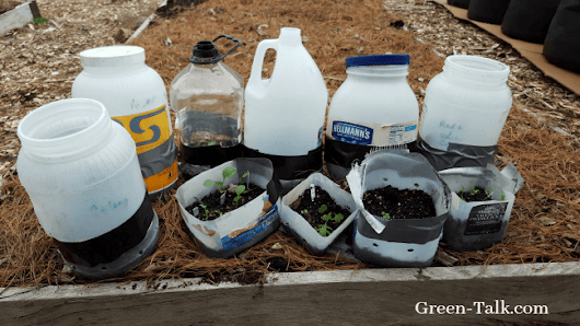 Winter Seed Sowing Vegetables Pro and Cons - Green Talk®