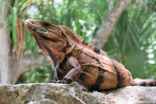 Reptile Pet Sitters - 10 Fascinating Reptile Facts for Pet Sitters