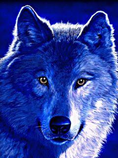 560+ Gambar Wallpaper Serigala Keren HD Terbaik