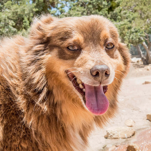Meet Al - a shy dog who was dumped in the deep desert - DELTA Rescue Care for Life Animal Sanctuary