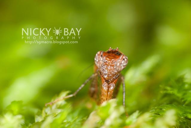 The Tiny Boxer Mantis