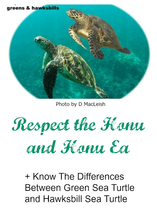 Live Aloha - Respect The Honu and Honu'ea - A Maui Blog