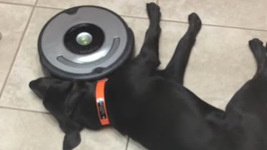 Roomba: I Fought the Paw and the Paw Won