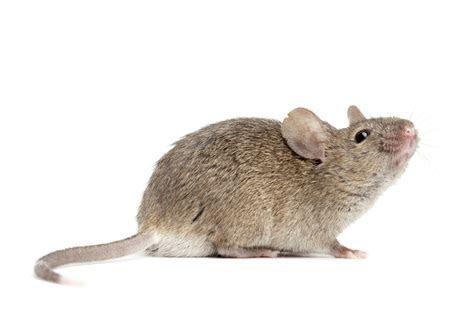2770x1847px Mouse 519.77 KB #291628