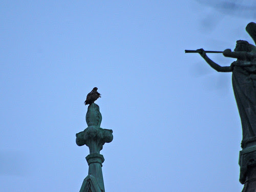 Red-Tail on Finial