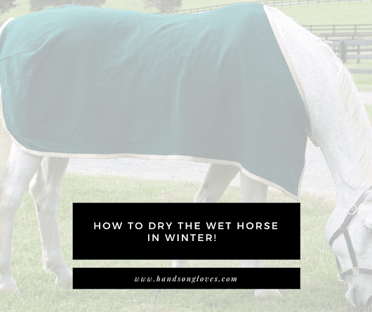 How to dry the damp or wet horse in winter! - HandsOn