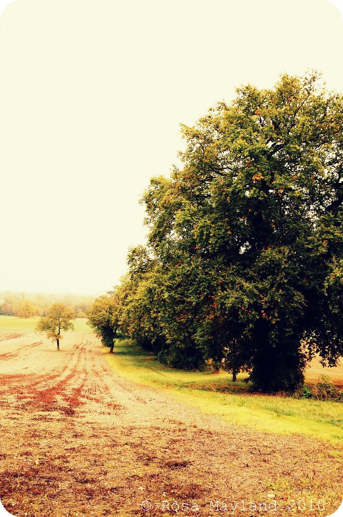 Fall Walk 4.1 bis