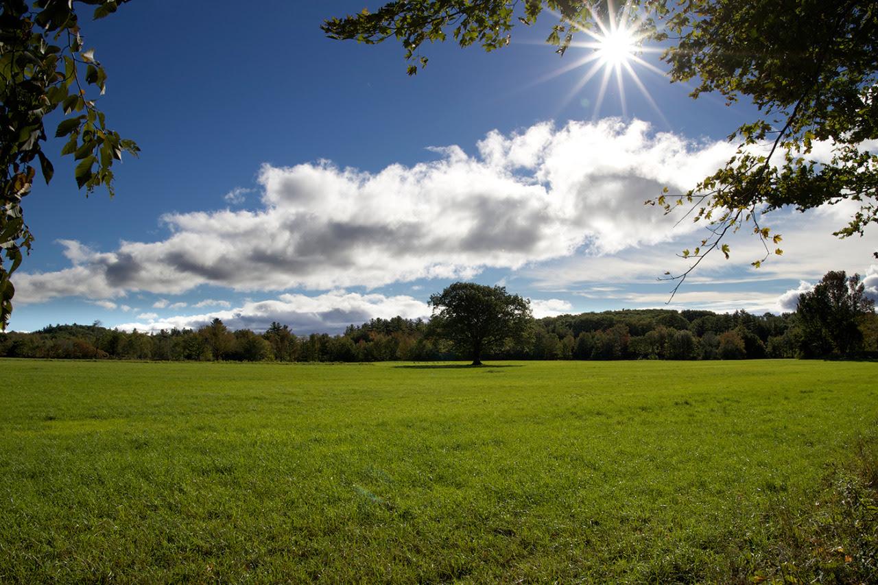 idylla, zieleń, natura, fotosynteza, niebo, chmury, słońce, świeżość, życie; źródło: Free Nature Stock
