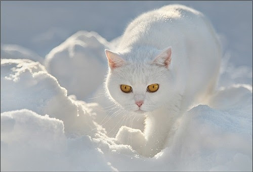:pixdaus, animal, animals, cat, cats, color