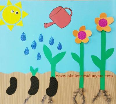 Bitkilerin Büyüme Aşamaları Okul öncesi Dünyam