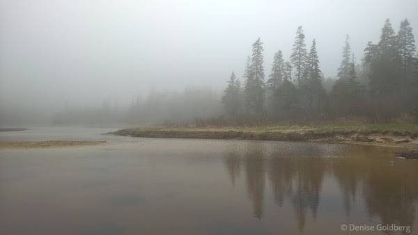 behind Sand Beach, trees stand in the fog