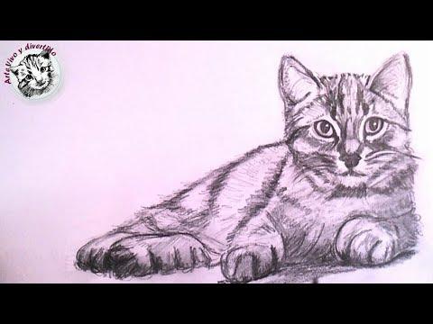 Como Dibujar Un Gato Realista A Lapiz Paso A Paso Como Dibujar Y