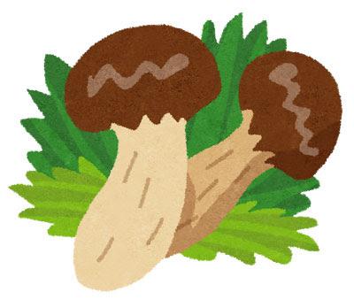 無料素材 松茸を描いたイラスト秋の味覚のデザインに