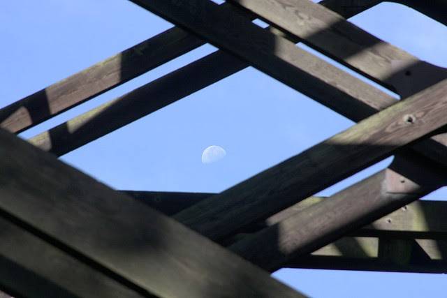 Moon, Barbur Viaduct, George Himes Park