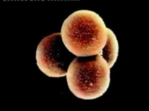 Qur an katika zama za sayansi na teknologia DOCT SULE