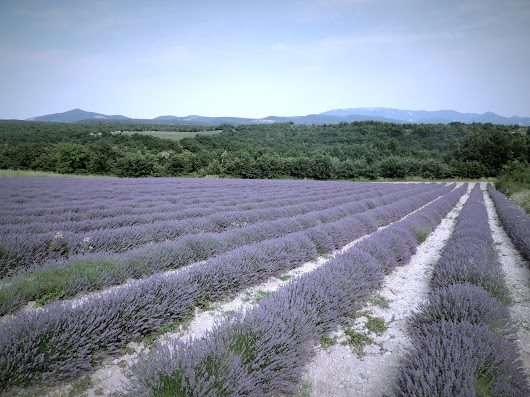 The Beautiful World of Provence Rosé - Wine Geographic