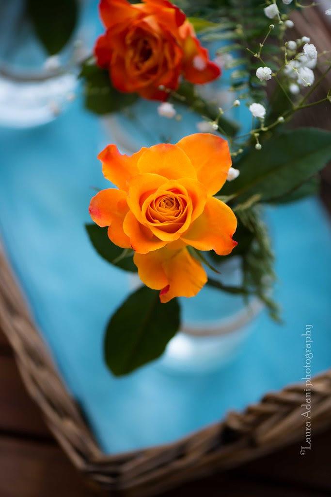 rose-9538