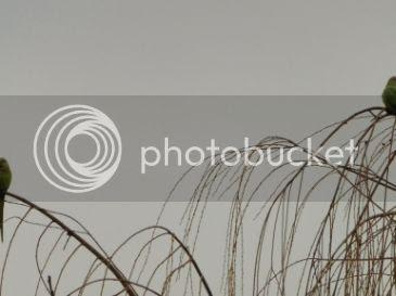 photo f5ee5276-9a92-42d5-83fc-3618ae95a0b6_zpstqyzmeen.jpg