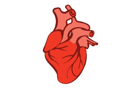 Anatomically Correct Heart Svg Cut Files