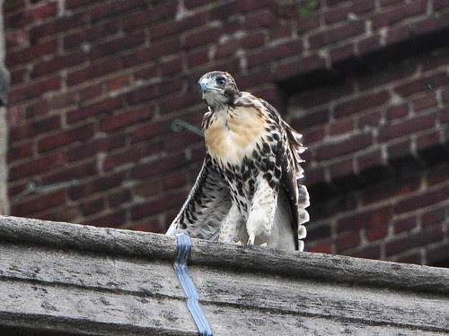 Cathedral Fledgling