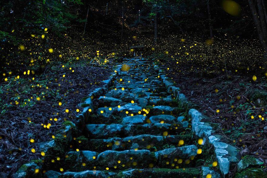 # 2 Mansiyon, Doğa: Peri Of Ormanı, Tamba, Japonya
