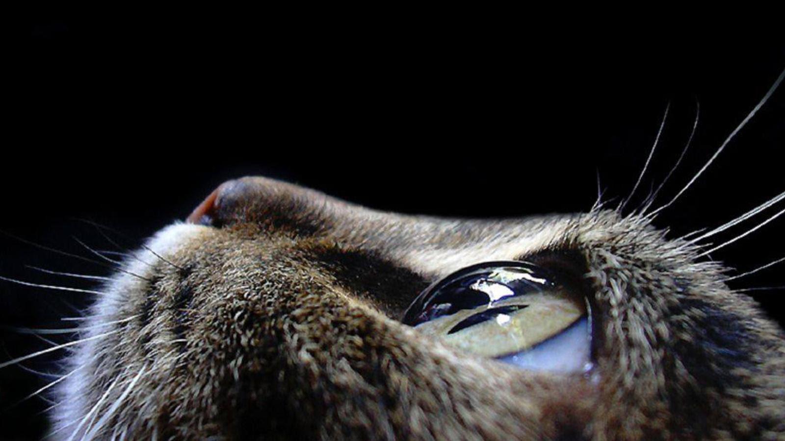 Cat Eye Macro Photography