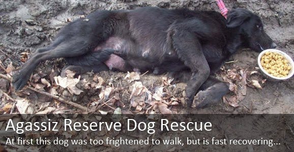 Animal Advocates Bc Dog Rescue Stories Reserve Dogs