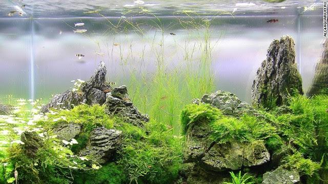 Award Winning Aquascapes - Aquascape Ideas