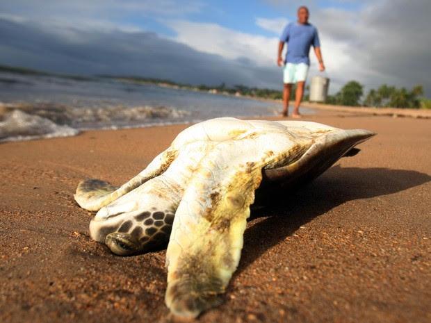 Tartarugas e peixes de diferentes tamanhos e espécies têm aparecido mortos nos últimos dez dias no litoral da praia de Aratuba, na Ilha de Itaparica (BA). O Instituto de Meio Ambiente e Recurso Hídricos enviou equipe para verificar a causa das mortes. (Foto: Lúcio Távora/Agência A Tarde/Estadão Conteúdo)