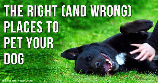 Even the Most Loving Pet Owners Can Make These Petting Mistakes