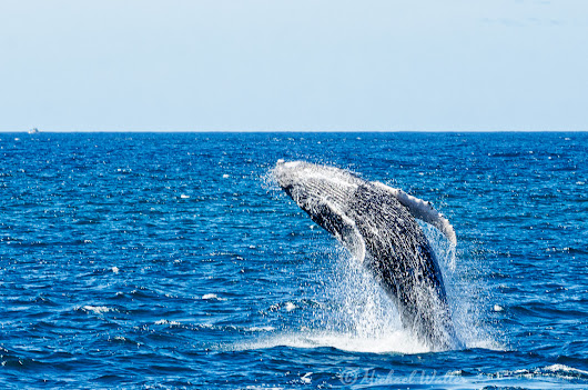 A Whale of a Good Time - Michael Waller Photography