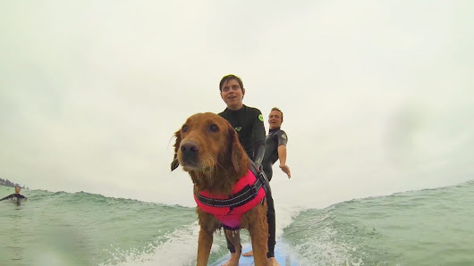 This Surf Dog Has Raised $500k Empowering Kids in Need through Shredding
